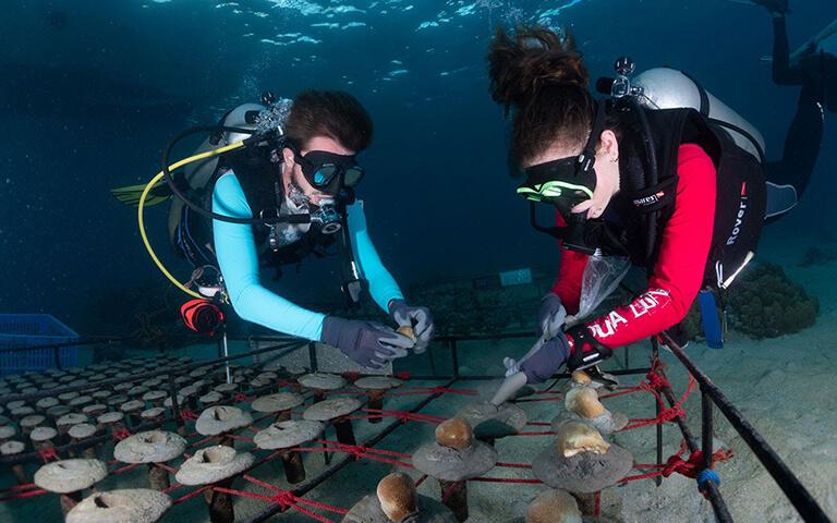 coral diver
